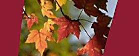 Herbst-Goldener-Oktober